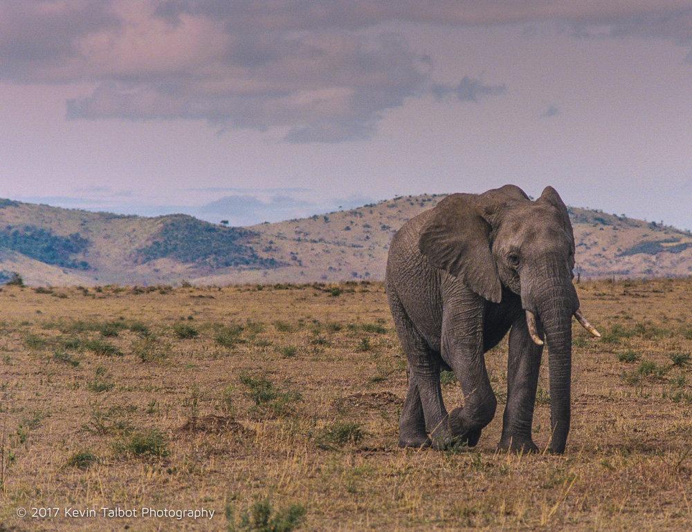 Africa Animals-09.jpg