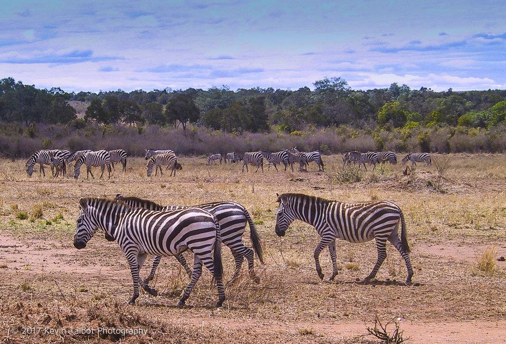 Africa Animals-11.jpg