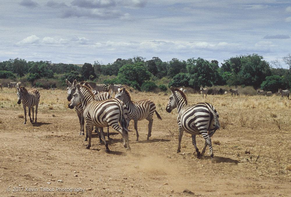 Africa Animals-12.jpg