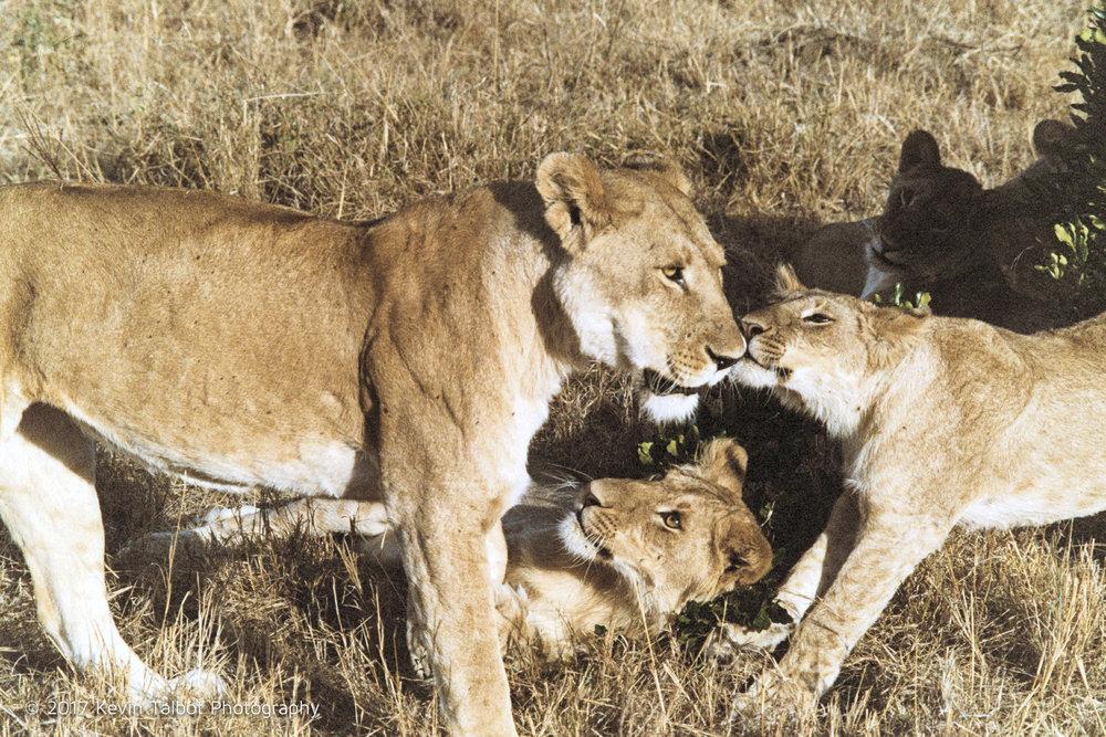 Africa Animals-18.jpg
