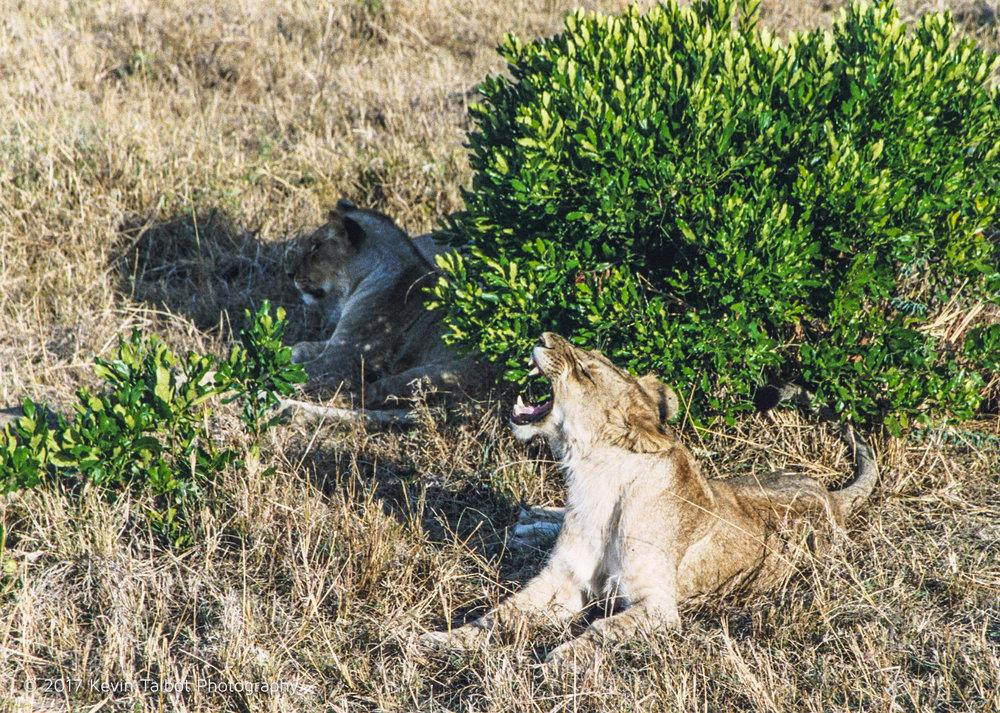 Africa Animals-17.jpg