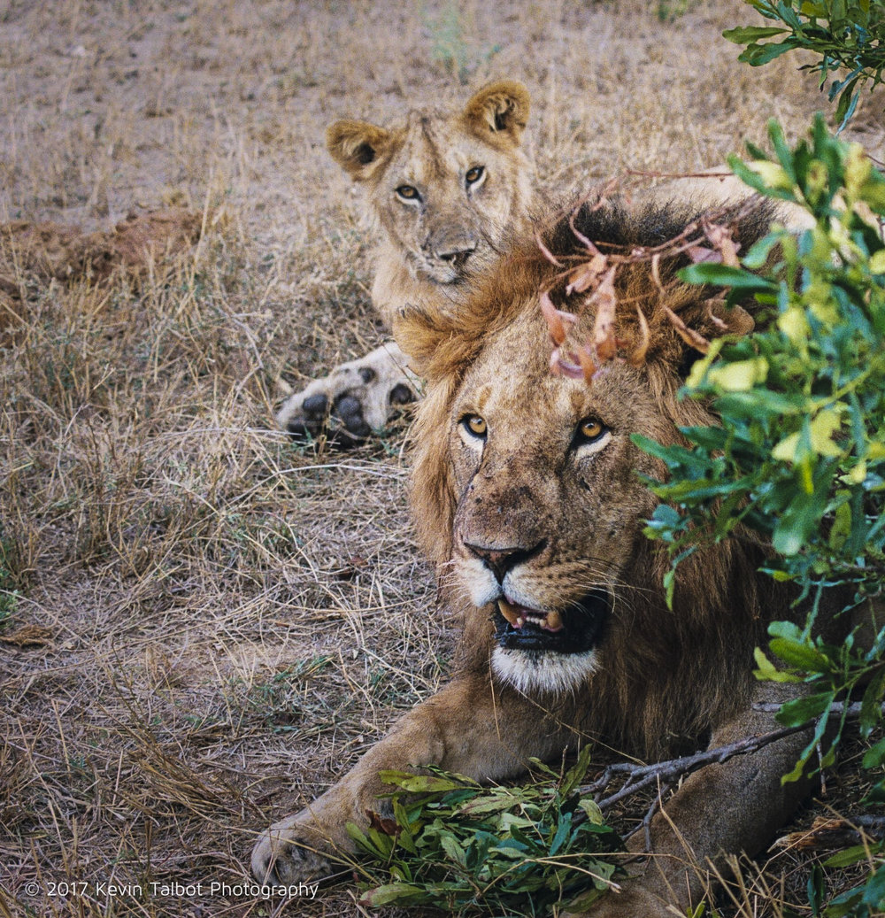 Africa Animals-20.jpg