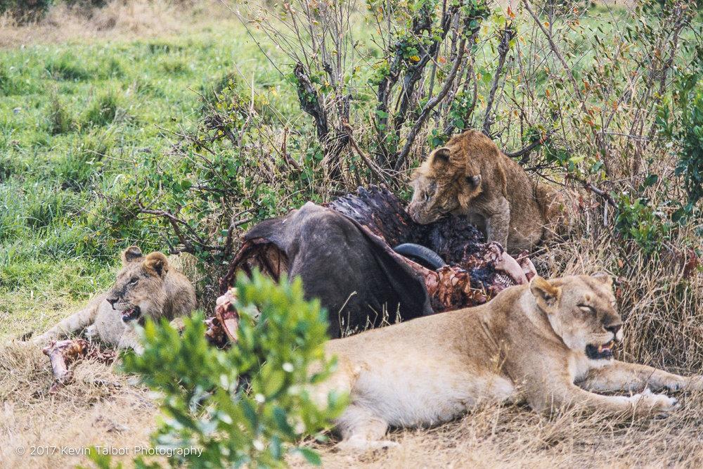 Africa Animals-19.jpg