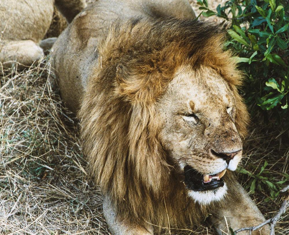 Africa Animals-21.jpg