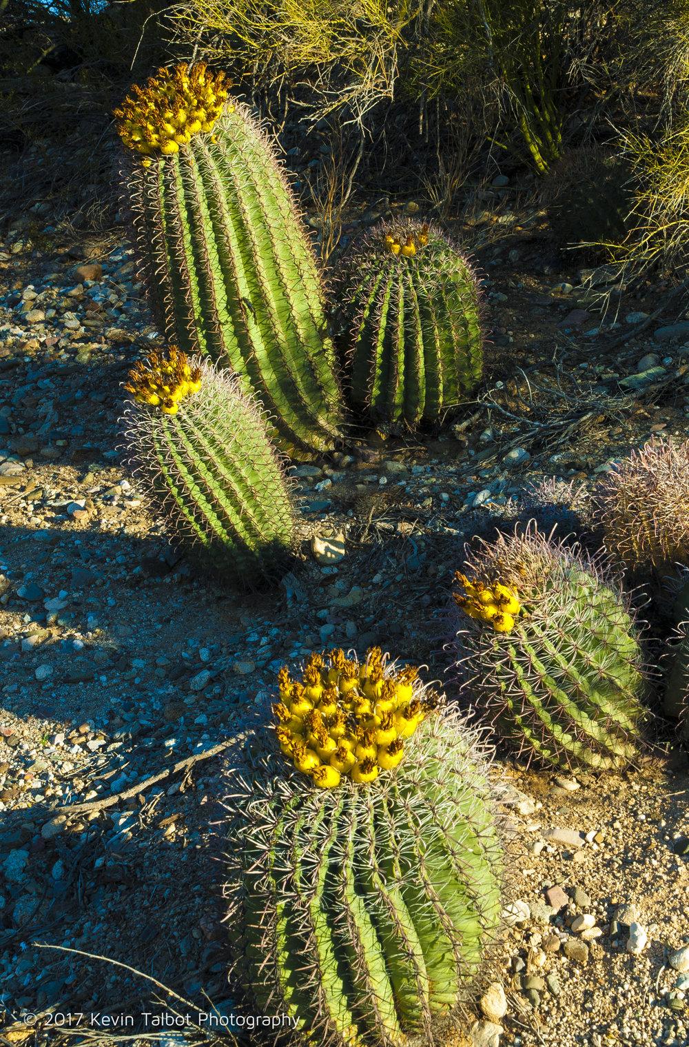 Tucson-01.jpg