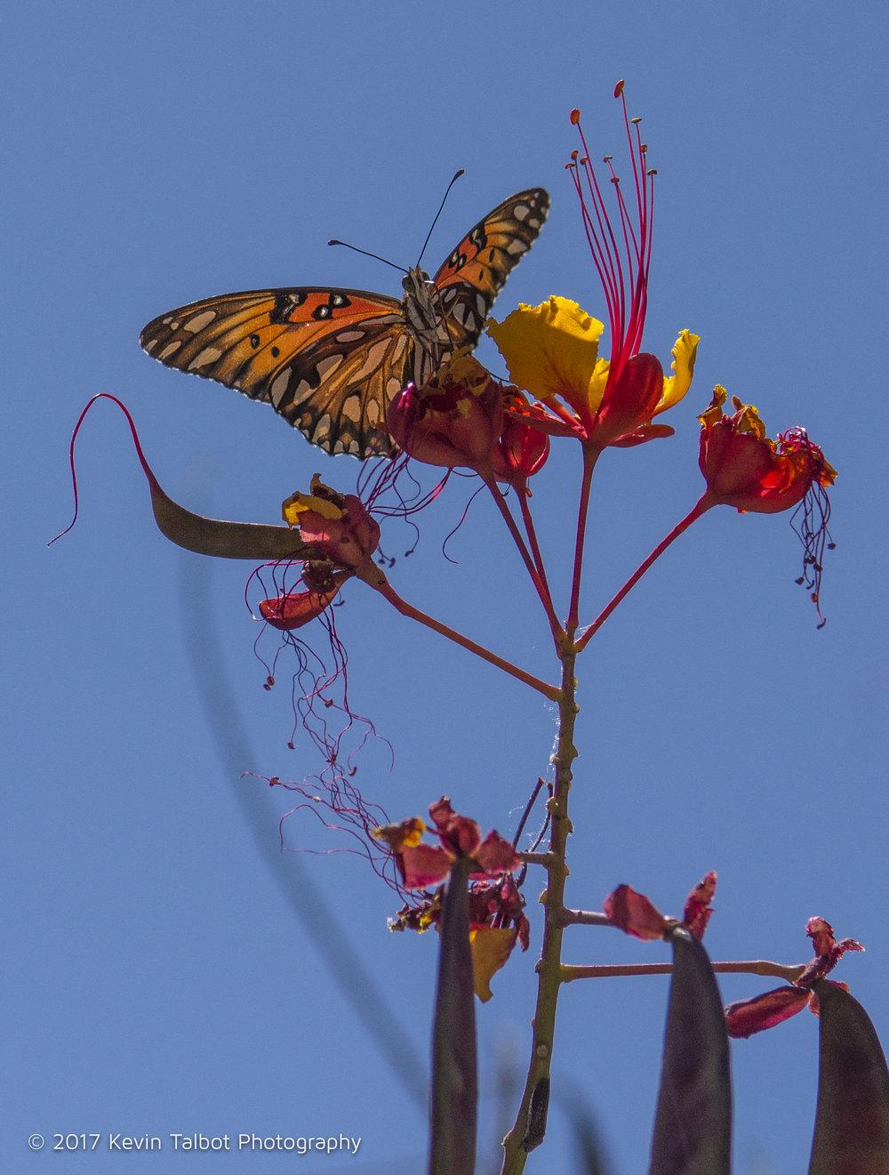 Tucson-16.jpg