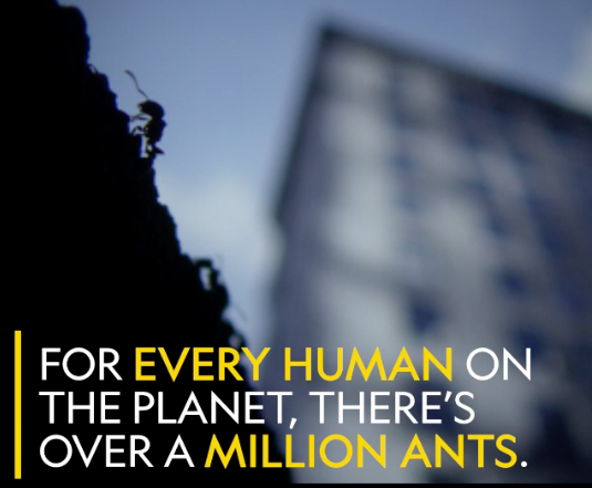 new york city ants