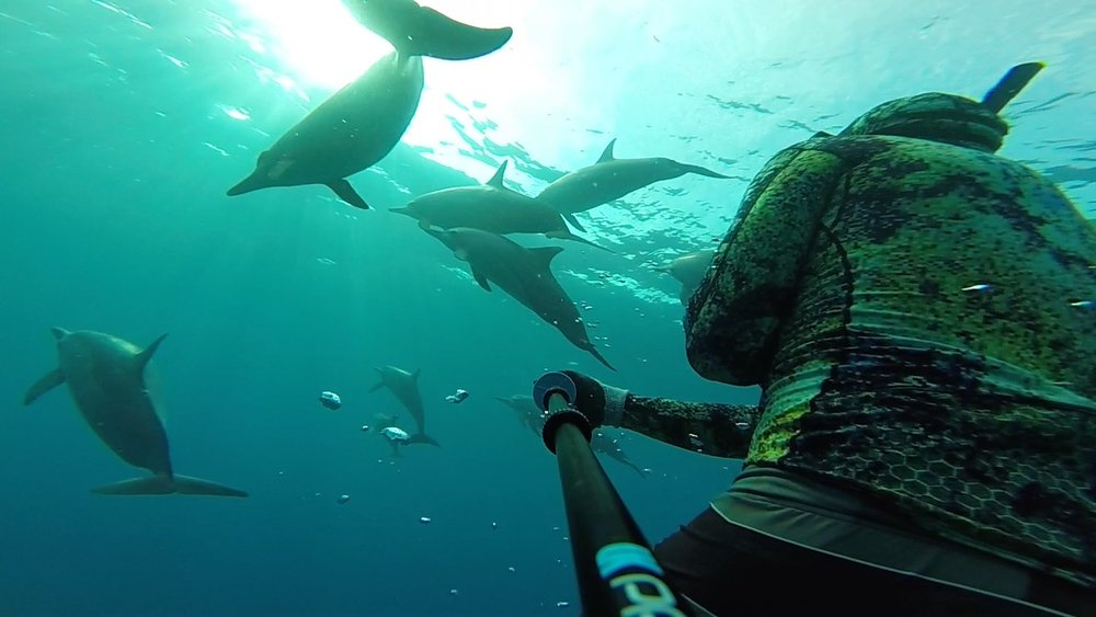C. Adair, Dolphin Dive. Hawaii.