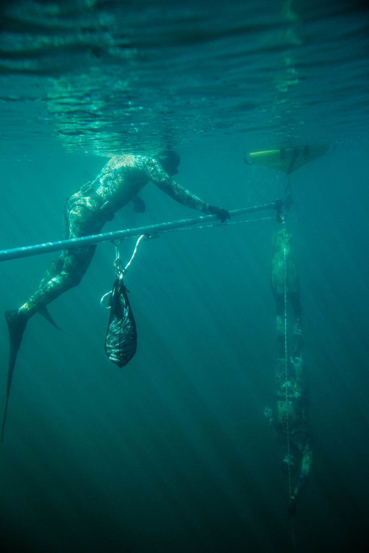 C. Adair, Free Immersion Dive. Photo: Jeremy Koreski