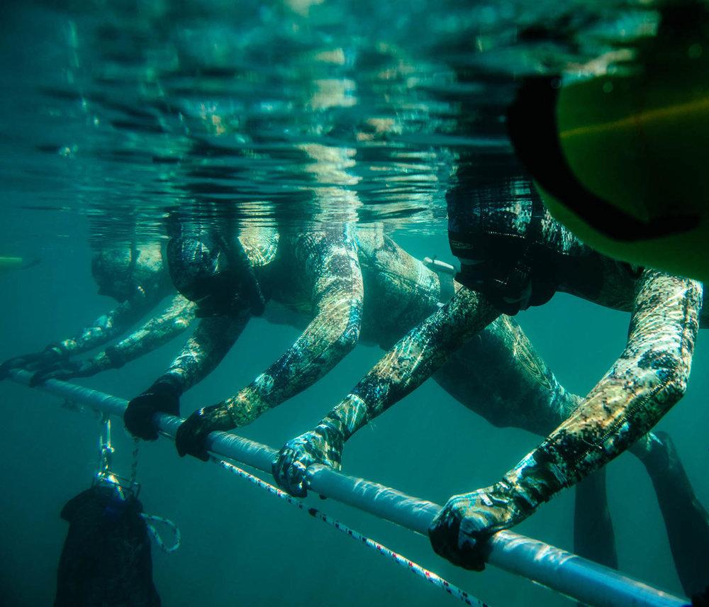 Freediver Course - AUG 10/11/12