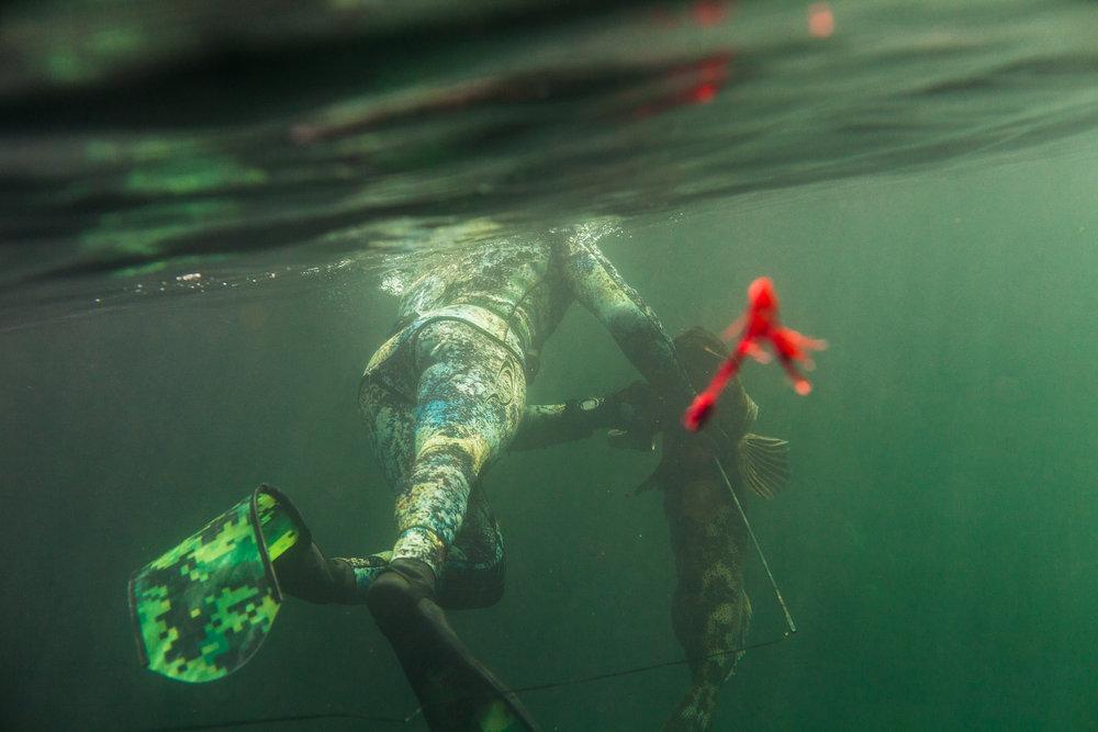 Freedive-Harvesting Course - AUG 16/17