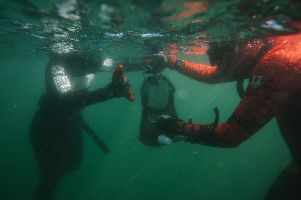 May 4-6 - $400* + GSTFor Certified Freedivers / BD STudents - Freedive-Harvesting Course, CHARTER + Tide to Table dining Experience*COURSE FULL*