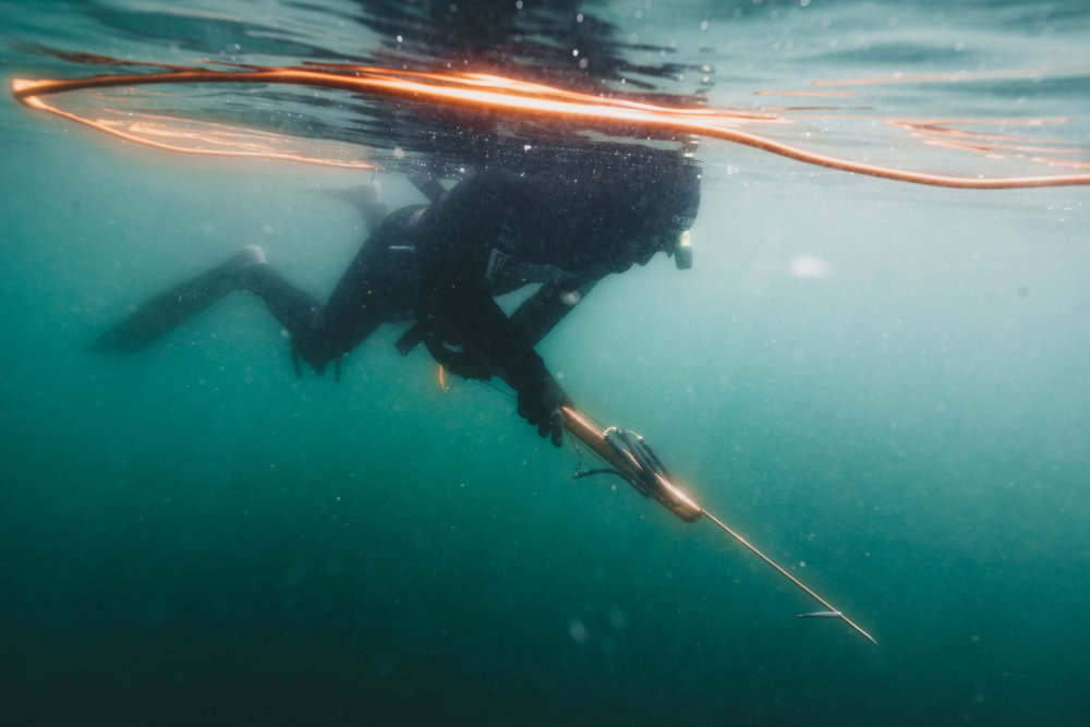 May 4-6 - Freedive-Harvesting Course + Tide to Table Experience:Tofino: May 4-6