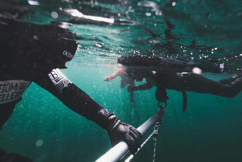 MAY 31-JUN 2 - Freediver Course: Tofino
