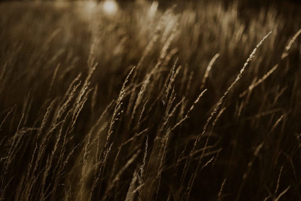 PaulSimonPhotography-CaylaDrew-FlagstaffArizonaEngagement-27.jpg