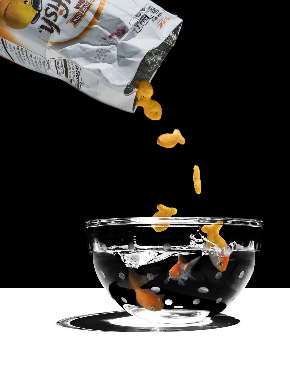 goldfish_rehydrate.jpg