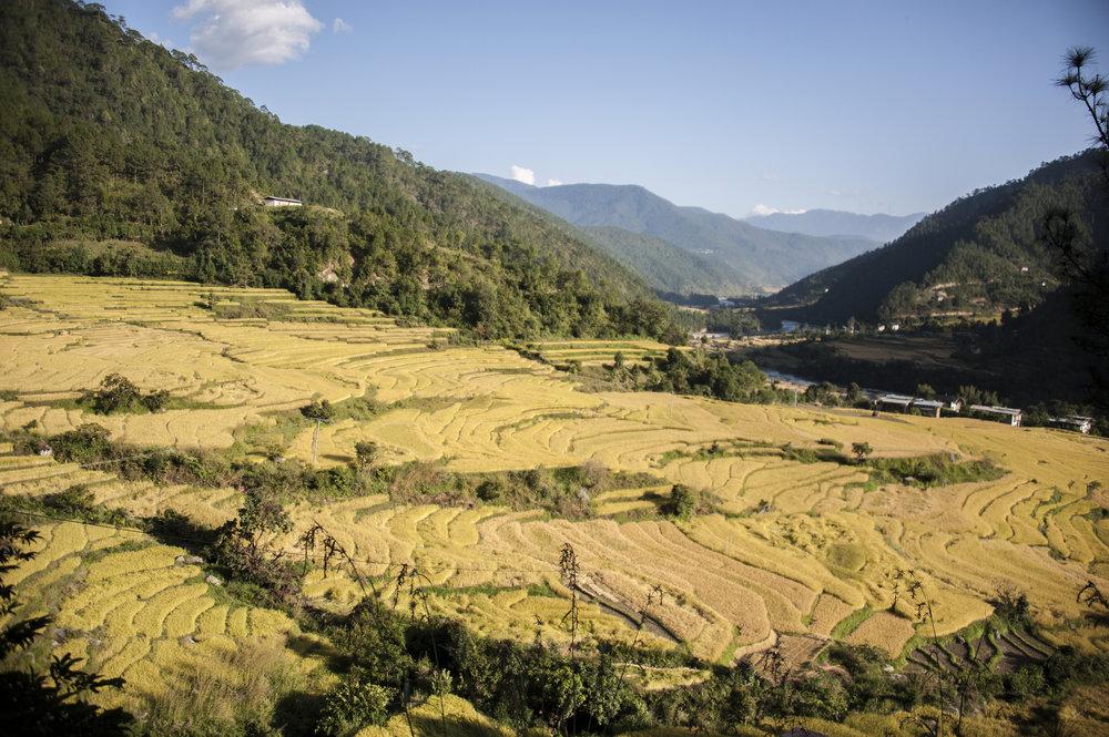 bhutan44.jpg
