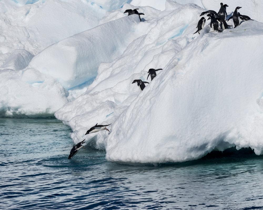 penguin56.jpg