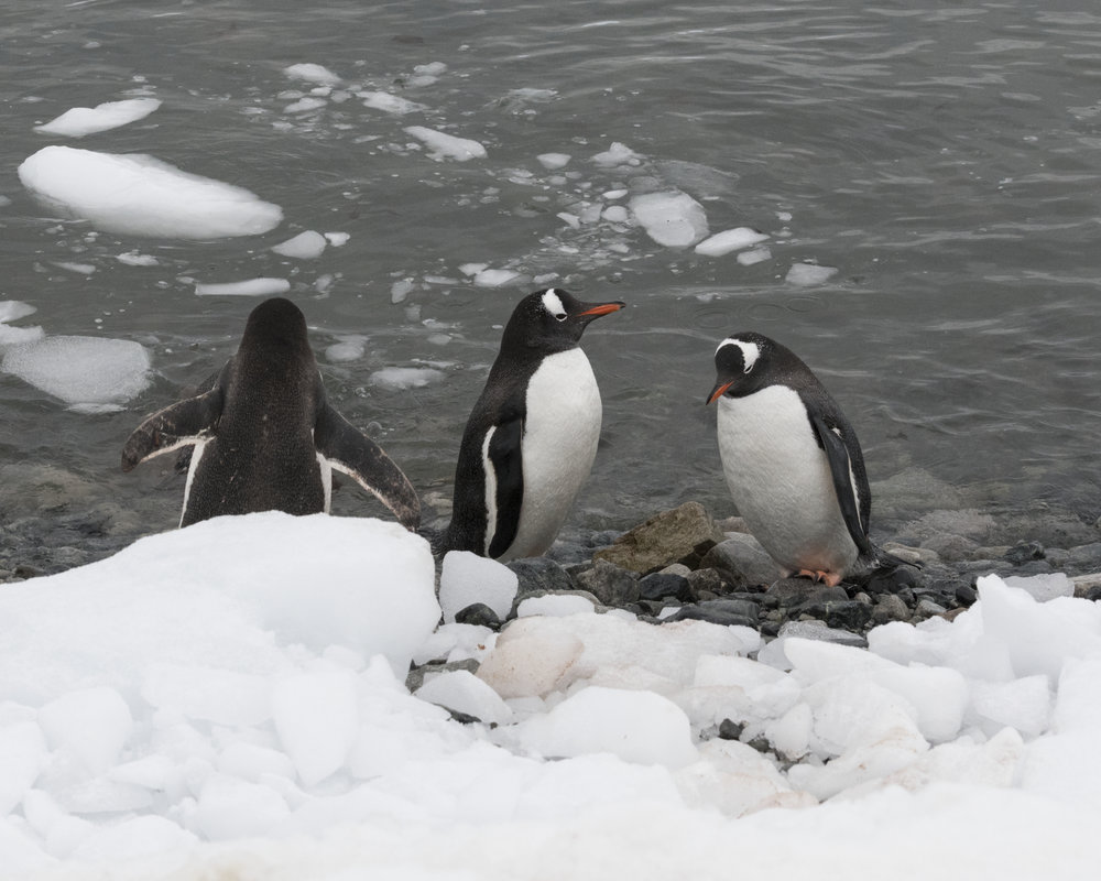 penguin6.jpg