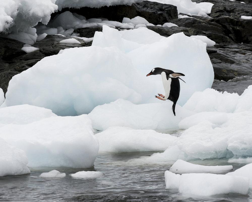 penguin9.jpg