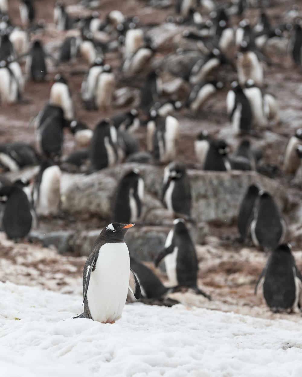 penguin11.jpg