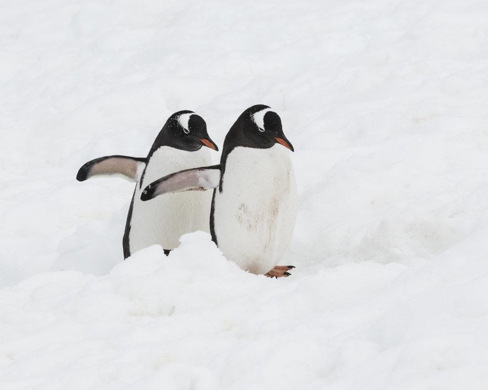 penguin15.jpg