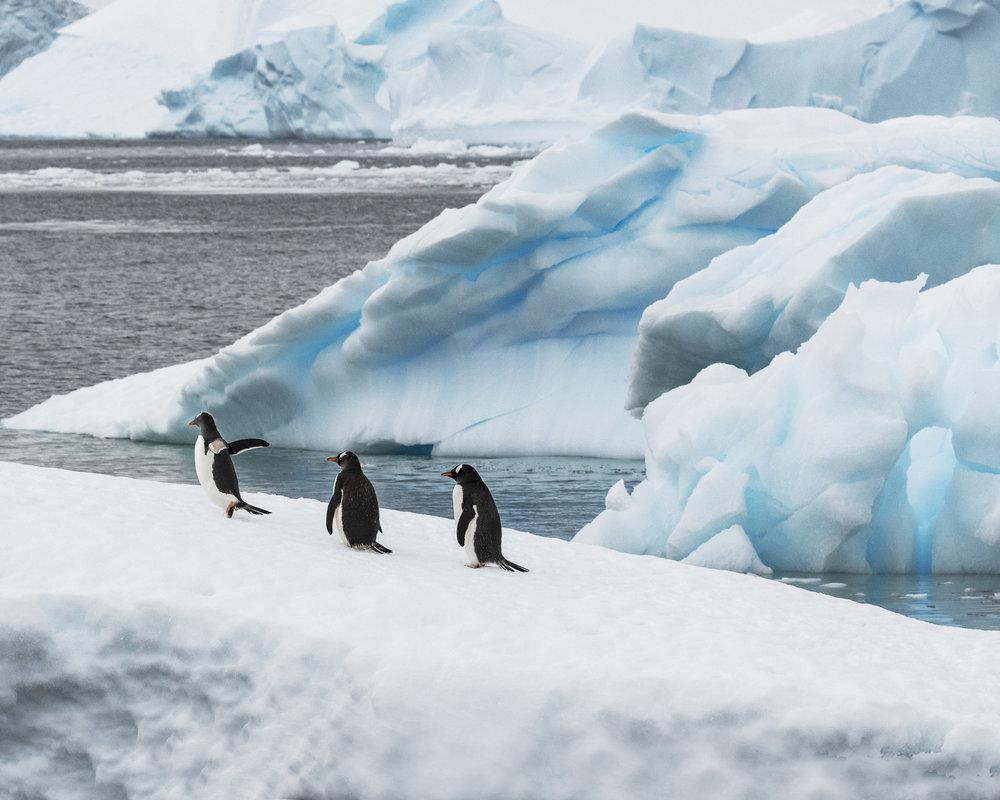 penguin17.jpg