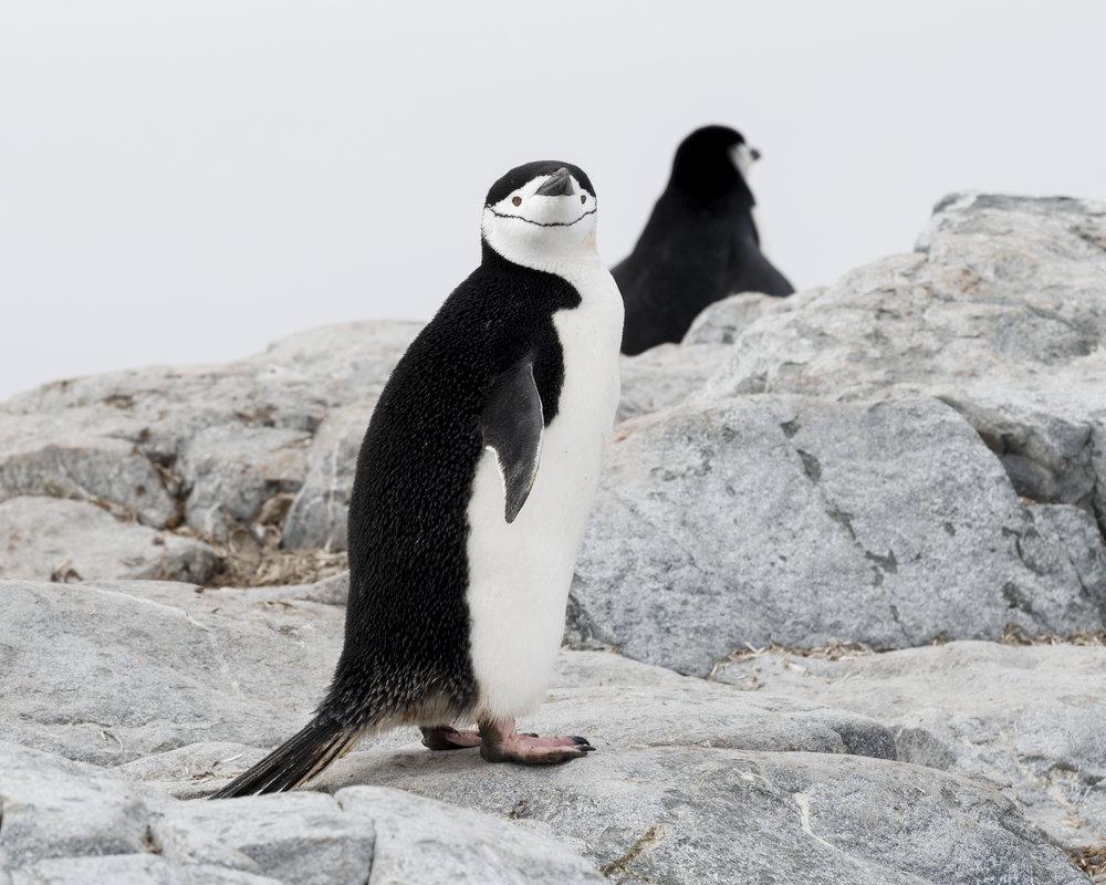 penguin25.jpg