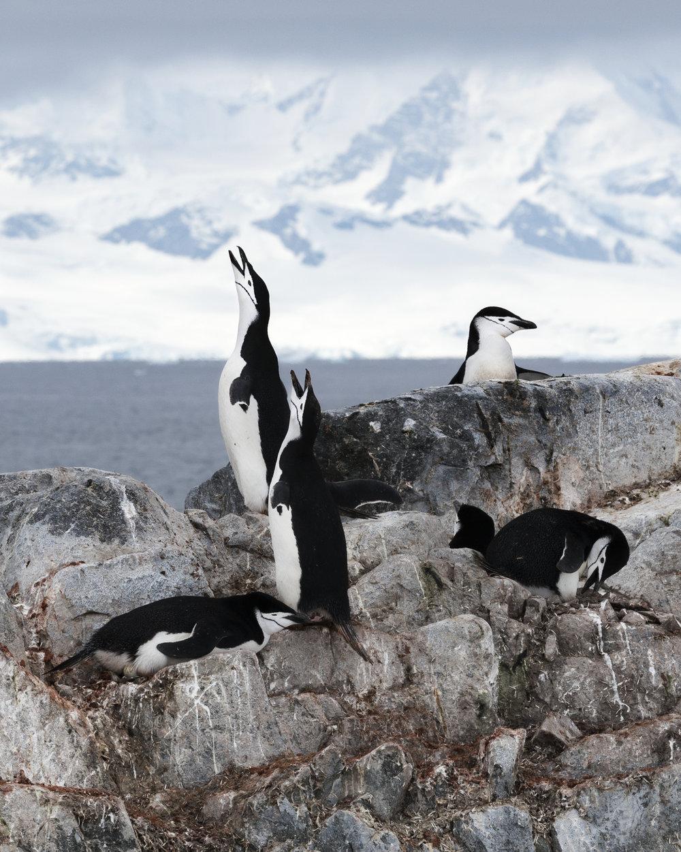 penguin29.jpg