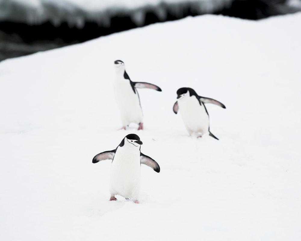 penguin36.jpg