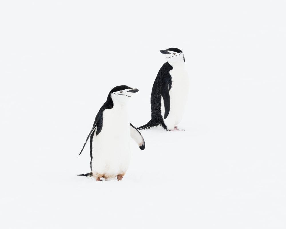 penguin39.jpg