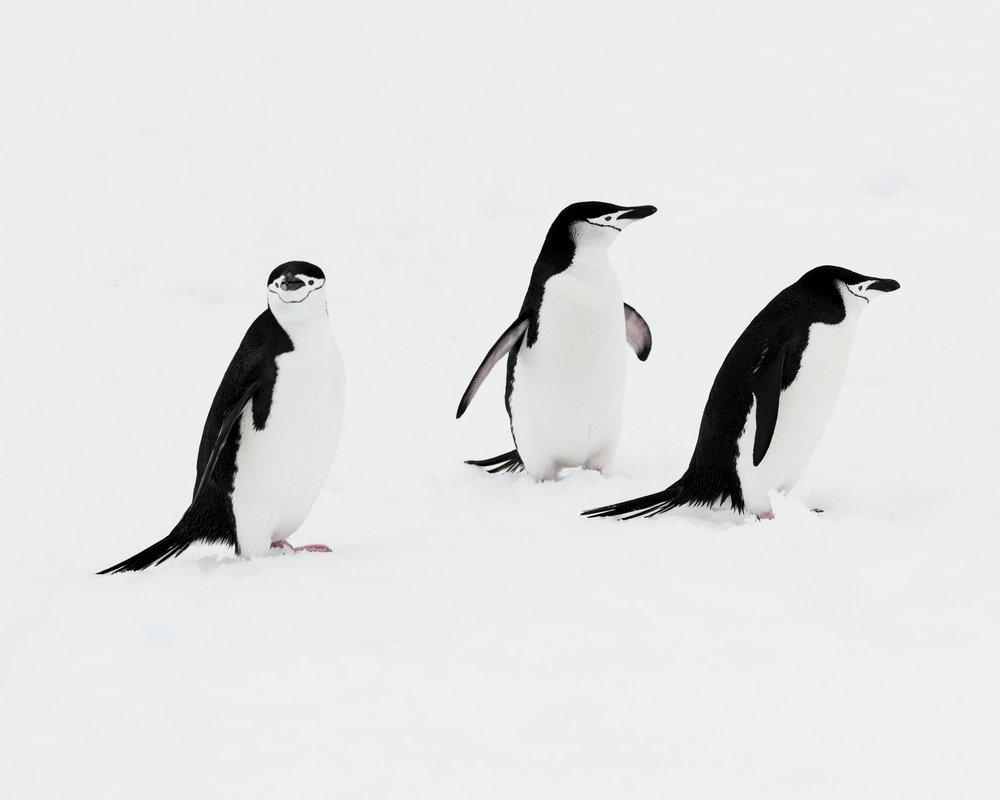 penguin38.jpg