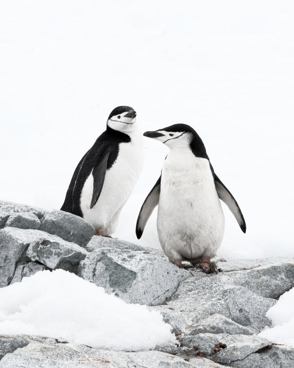 penguin40.jpg