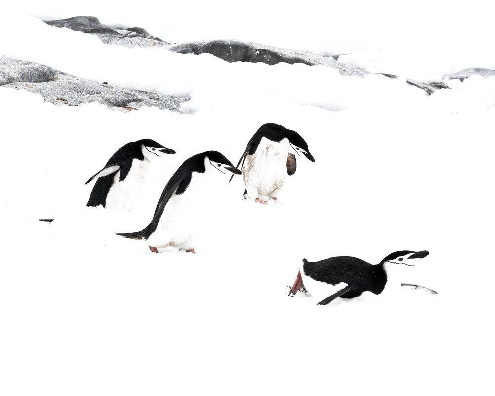 penguin42.jpg
