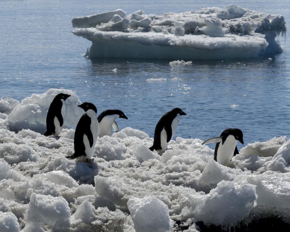 penguin47.jpg