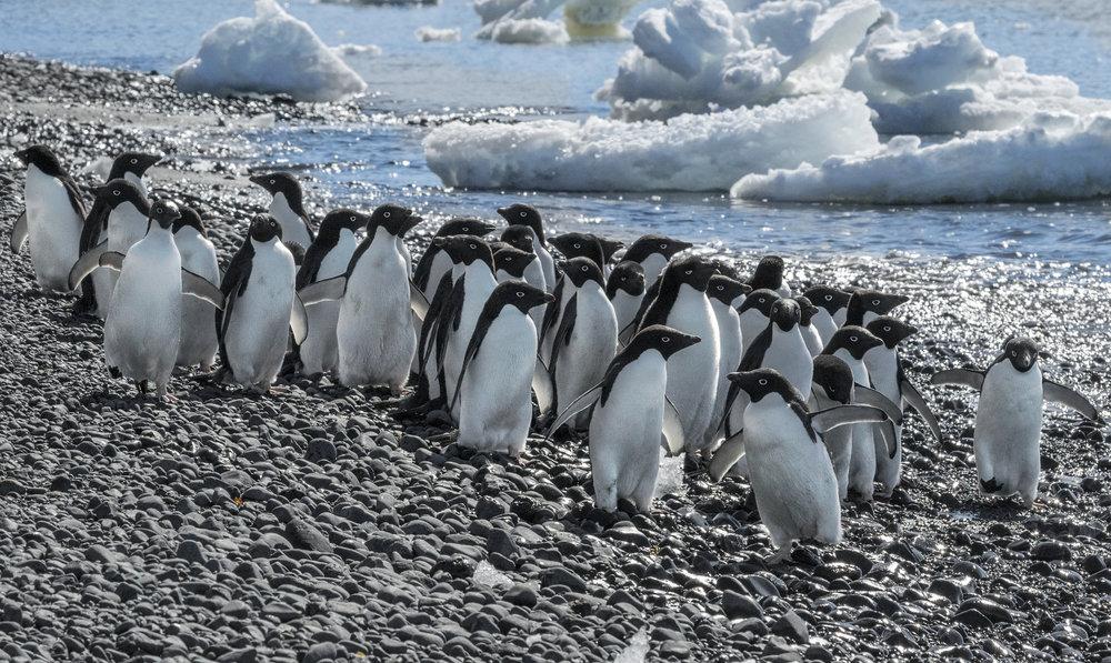 penguin48.jpg