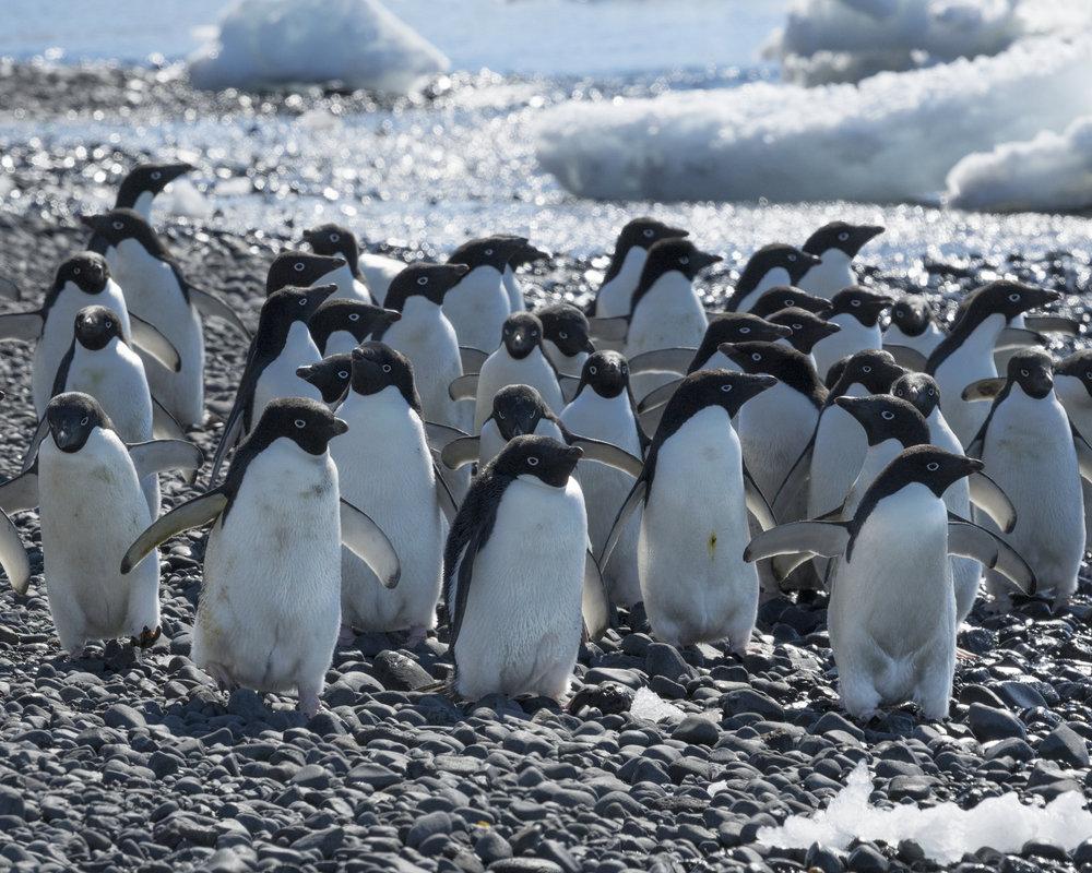 penguin49.jpg