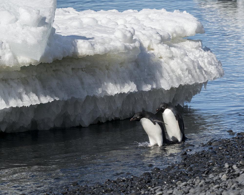 penguin52.jpg