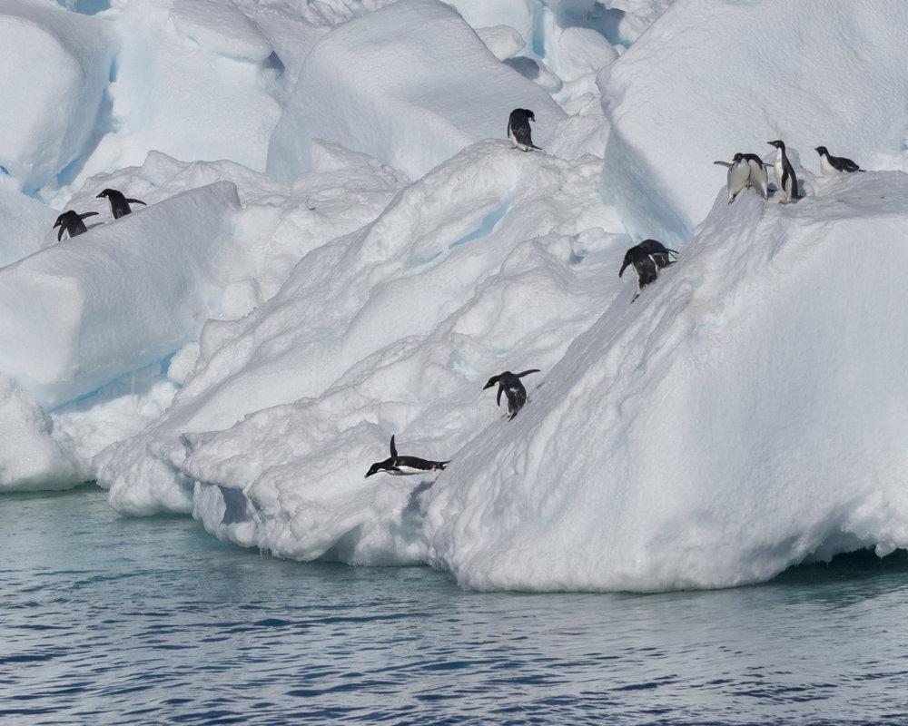 penguin58.jpg