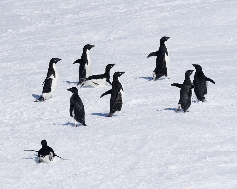 penguin60.jpg
