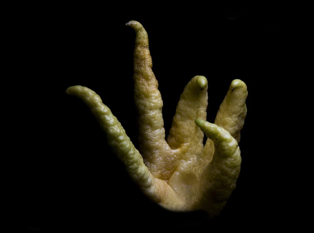Buddah's Hand