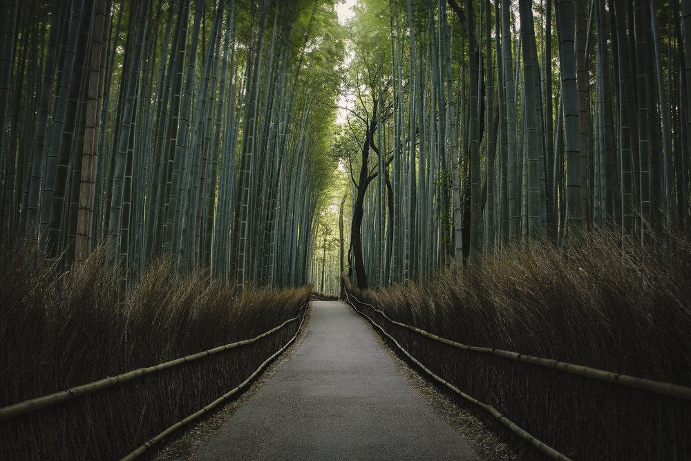 6a - Arashiyama (2015).jpg