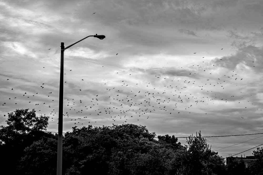 Birds flying in the sky above the Rockcliffe-Smythe neighbourhood
