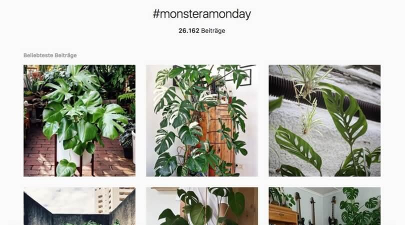 Hashtags auf Instagram.jpg