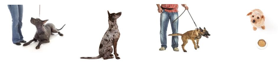 Home visits dog training bristol