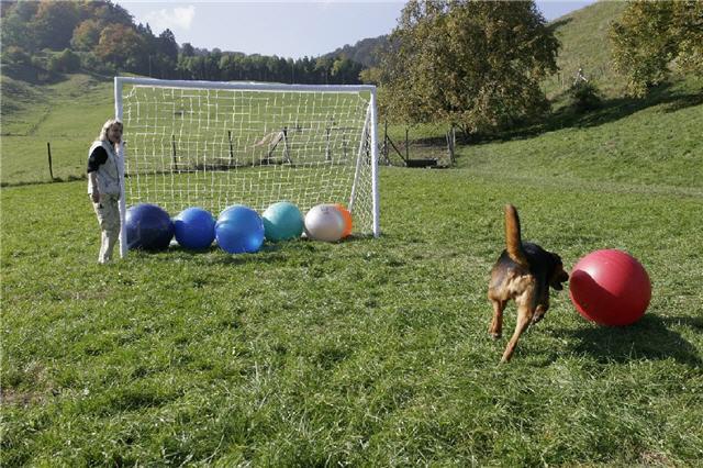 Score A Goal!!