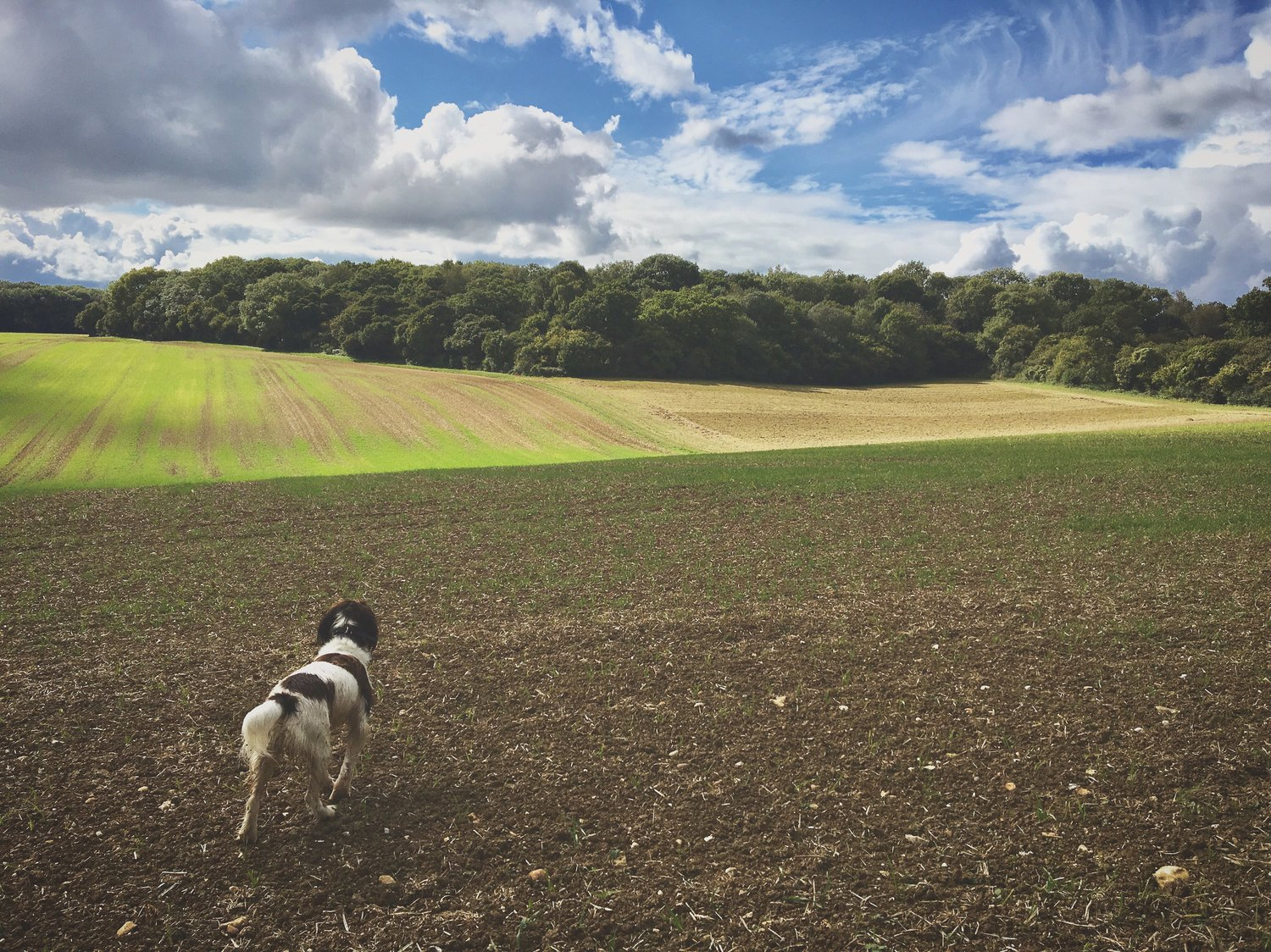 Our favourite weekend walks in and around Winchester