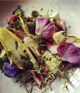 Laverstoke Mozerella, Chicory, Watercress and Hazelnut Pesto