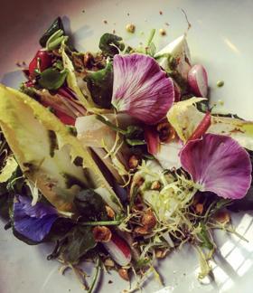 Laverstoke Mozerella, Chicory, Watercress and Hazelnut Pesto