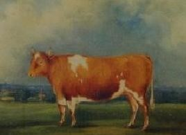 THE GUERNSEY STEER     Earliest known painting in oils of a Guernsey 1841 By permission W Luff